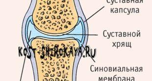Продукты/витамины для суставов;коллаген,желатин,гидролизированный коллаген;Хондроитин и глюкозамин. Хруст и боль в суставах.Эффективны ли готовые препараты хандроитин сульфата и глюкозамина?