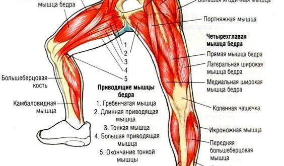 какие мышцы работают в плие