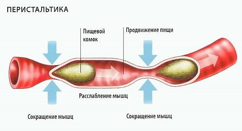 Таблица продуктов, содержащих клетчатку