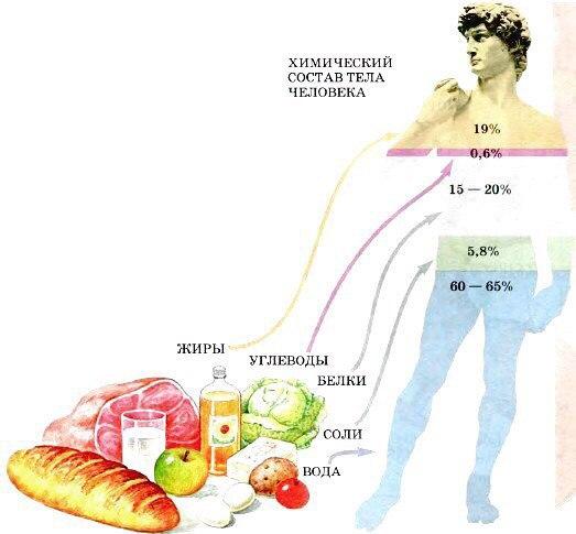 Можно ли есть перед сном,можно ли кушать перед сном,можно ли протеин перед сном,можно ли молоко перед сном,можно ли есть творог перед сном