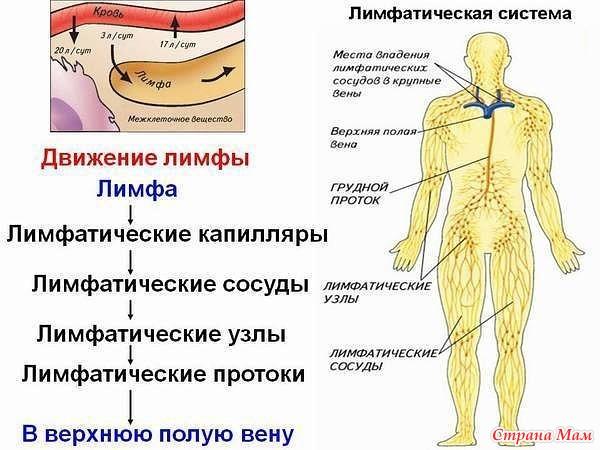 Массаж для похудения,лимфодренажный массаж,способствует ли массаж похудению,массаж для похудения в домашних условиях,похудательный массаж,эффективен ли массаж для похудения