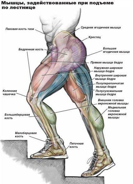 Упражнения при ходьбе для похудения