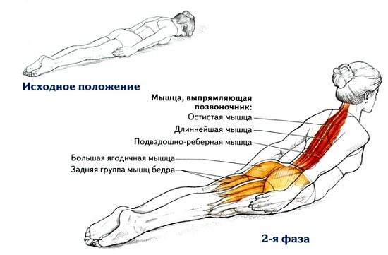 Наклоны вперед со штангой, good morning упражнение