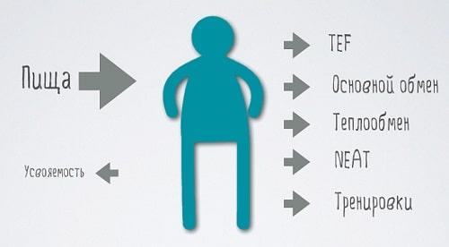 Сет поинт,сет поинт веса,set point,какой нормальный вес,ваш идеальный вес на ваш рост,