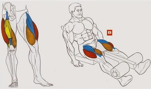 Вредные/опасные упражнения в зале: разгибания ног, боковые наклоны, жим/тяга блока из-за головы, присед в Смите, гиперэкстензия на ягодицы, скручивания на римском стуле, сведение разведение ног