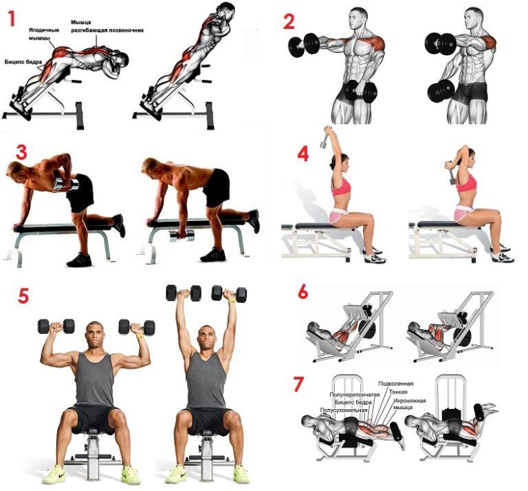 хвост комплекс упражнений на все группы мышц фото пользователи сети