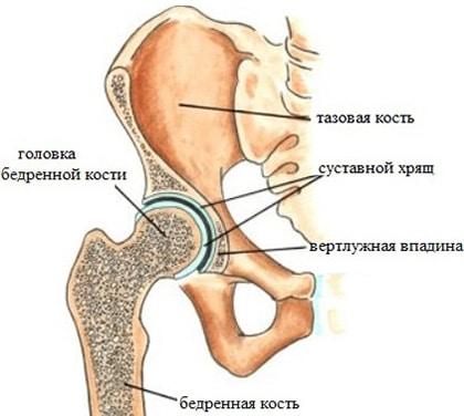 Почему хрустят суставы? Причины и лечение хруста в суставах