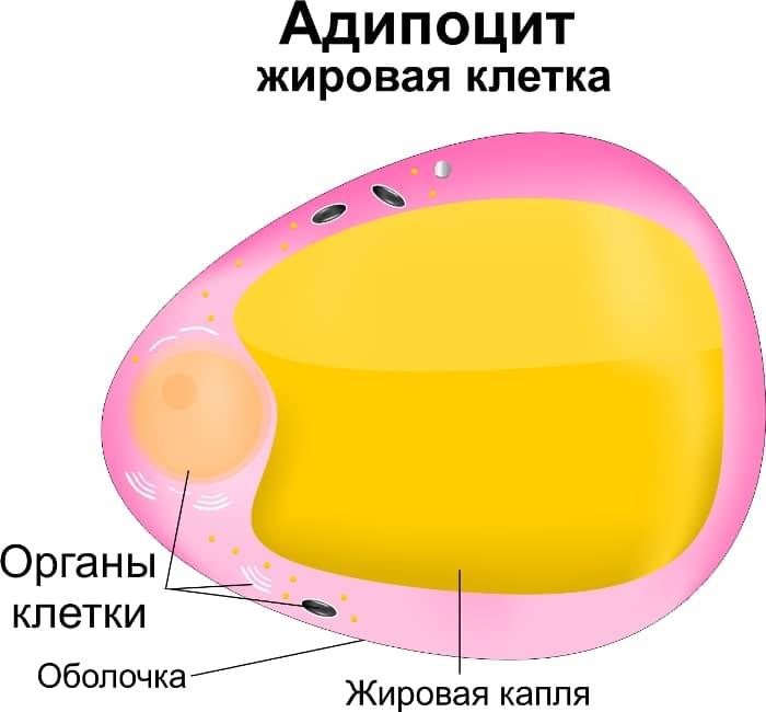 """Душ Шарко: начистоту о процедуре пустышке - анализ """"пользы"""""""