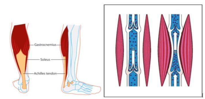 Отек ног, рук или лица в жару: что делать - срочная помощь из 11 простых действий