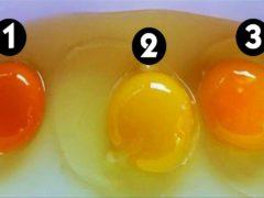 От чего зависит цвет желтка в яйце: как он связан со здоровьем курицы?