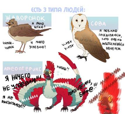 Совы и жаворонки, голуби и дельфины - а не выдумано ли деление и как стать из совы жаворонком?