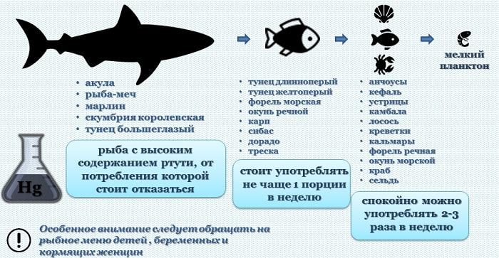 Почему селедка должна быть на новогоднем столе: рецепт лучшей бюджетной рыбы для здоровья