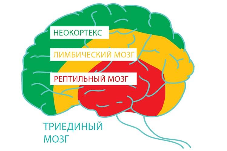 """Где конкретно """"живет"""" сила воли: просто о физиологии"""