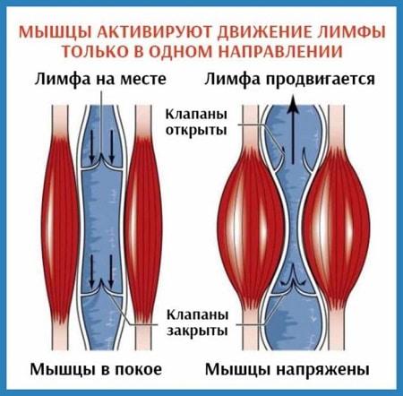 3 этажа здоровья по Бубновскому
