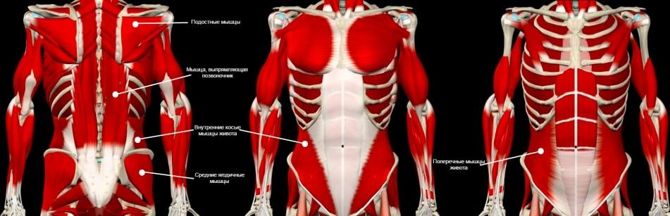 Мышцы кора - центр управления тела