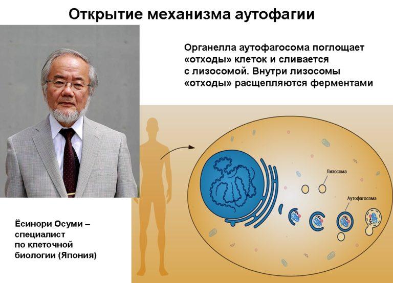 """Йосинори Осуми: """"я никогда не говорил, что голодание способствует аутофагии"""""""